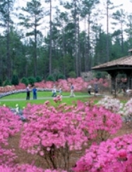 Auburn AL - great place for retirement living