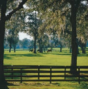 Ocala horse country is an attractive retirement destination
